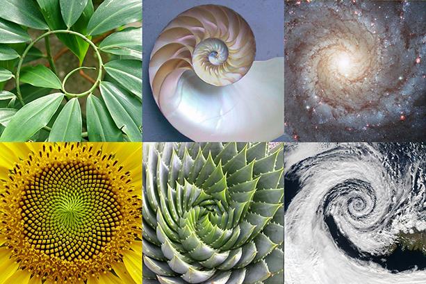 Het kosmisch creatieprincipe