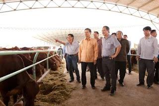 Nông trại chăn nuôi bò HAGL tại Attapeu, Lào. Ảnh: VTC