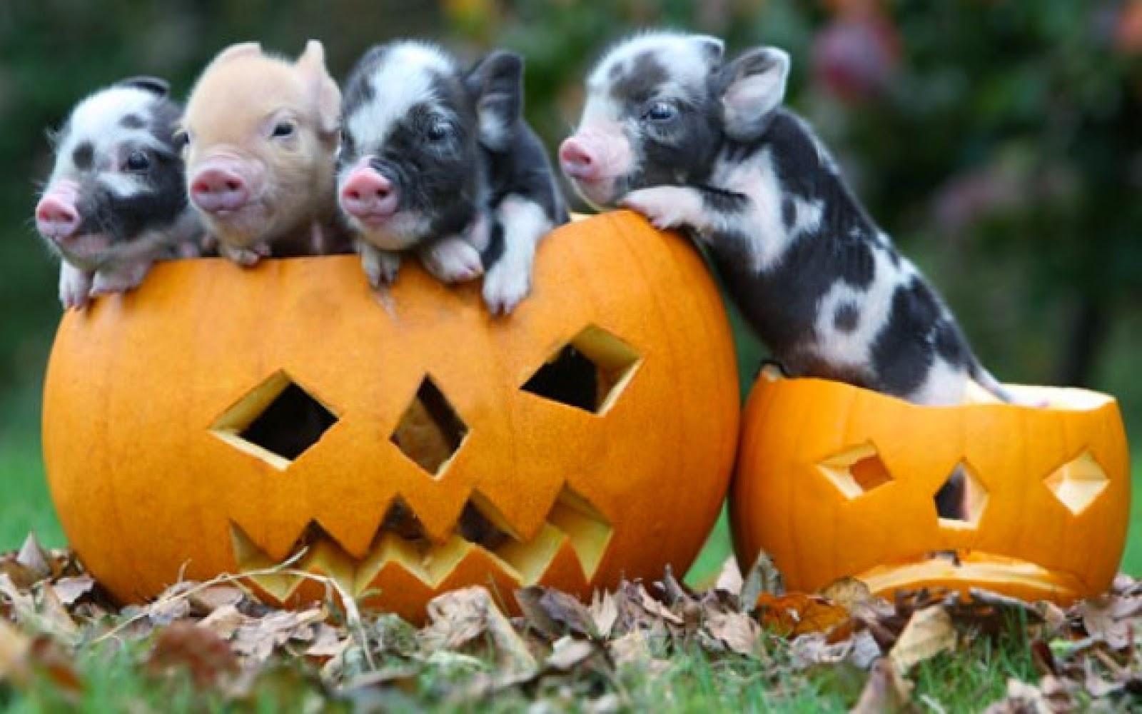 Funny halloween animals 26