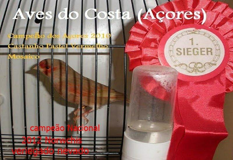 Aves do Costa Açores