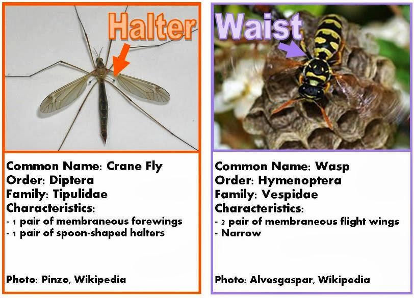 Wasp vs bee sting - photo#15