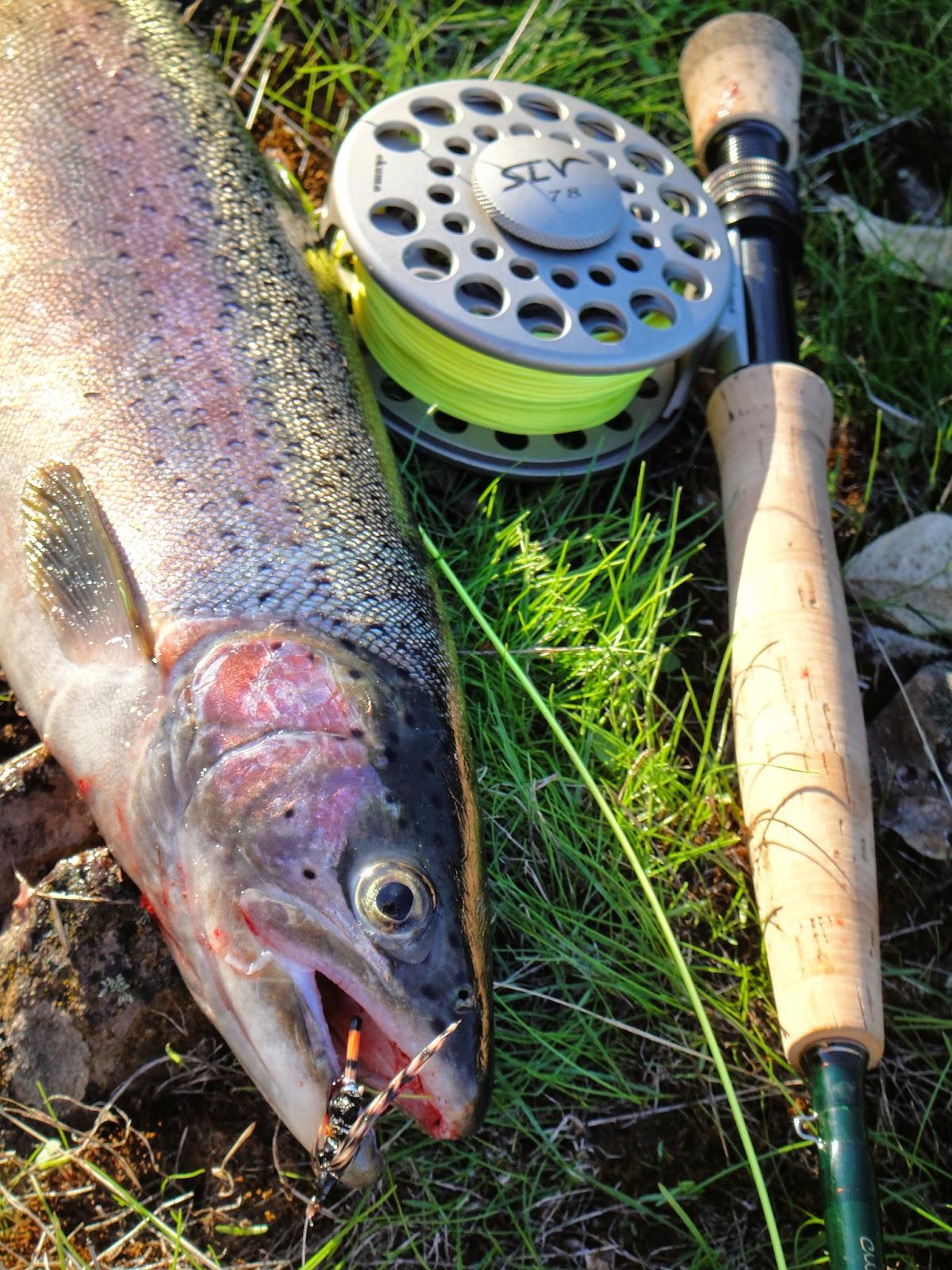 Fly fishing for steelhead rogue river fishing guides for Fly fishing for steelhead