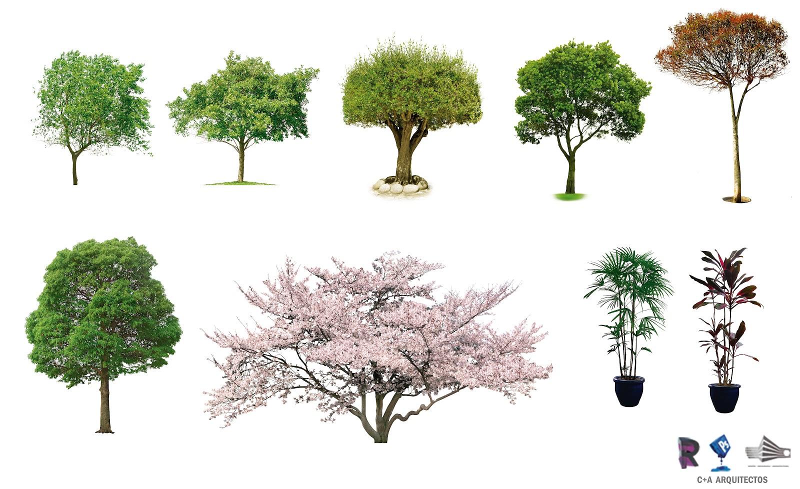 C a arquitectos dise o infografia arquitectura for Arbol para jardin