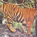 Melghat Tiger Reserve Details 2015 , How to reach, FLOURA & FAUNA