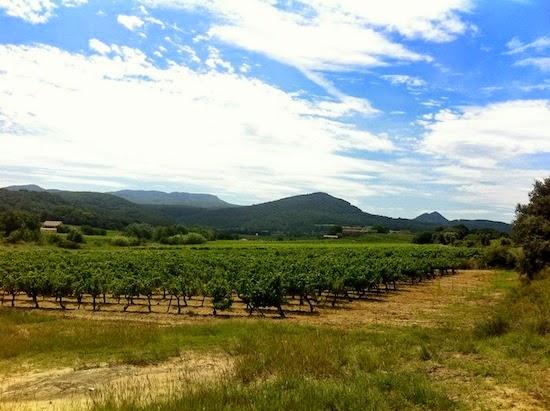 The vines in Vaison la Romaine