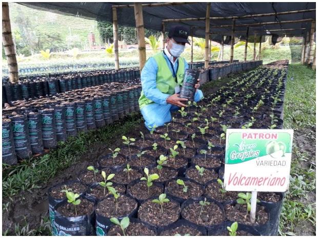 Fuerte, pujante y de alta condición fitosanitaria, así es la citricultura en Boyacá