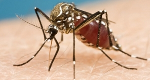 Zika Virus ! Nigeria Issues Travel Restrictions To Latin America