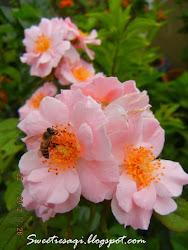 Clair Martin or Sakura