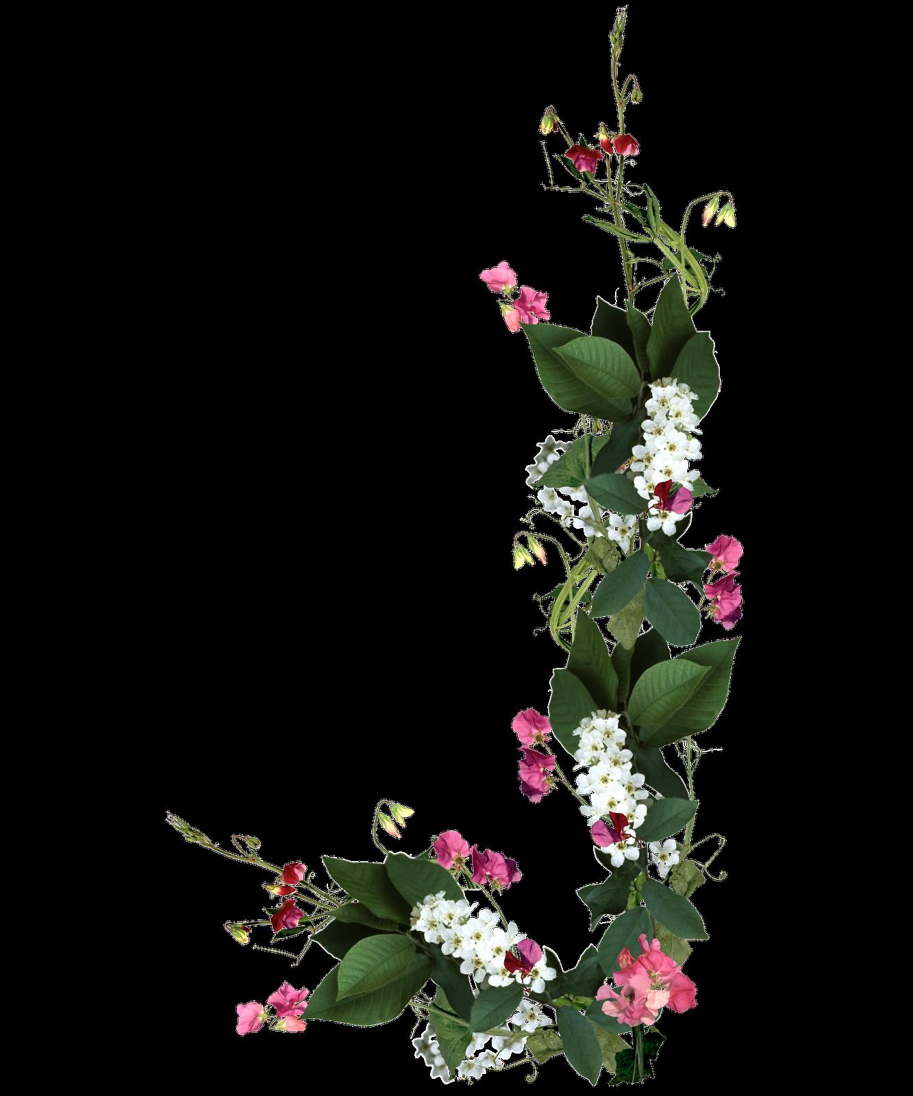 Marcos Para Fotos De Rosas