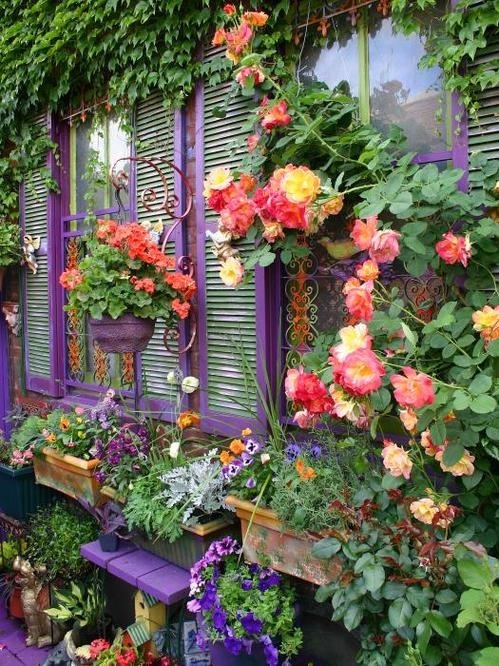 ... , the shutters, bench, and hanging flower pot are all painted purple