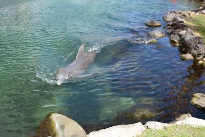 http://hawaiibridalweddings.blogspot.com/2013/10/kahala-dolphins.html