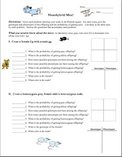 amy brown science free monohybrid genetics practice problem worksheet. Black Bedroom Furniture Sets. Home Design Ideas