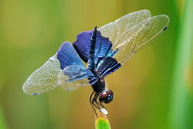 Dragonfly Delight A Life Cycle in Superb Macrophotography  The