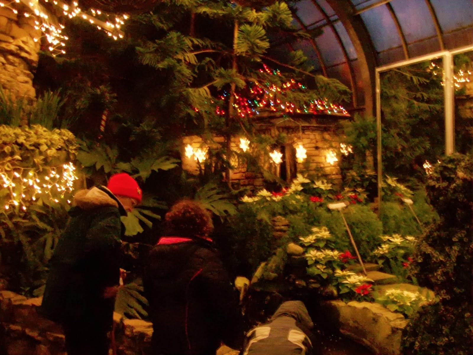 Agastache in the Garden: Vander Veer Conservatory Christmastime