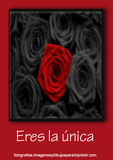 Eres la unica rosa roja Fotos de rosas rojas para facebook