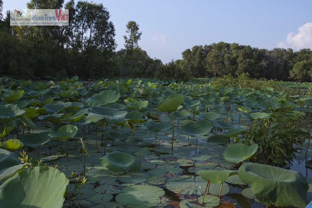 Tra Su Cajuput Forest - The beauty of nature in Mekong delta