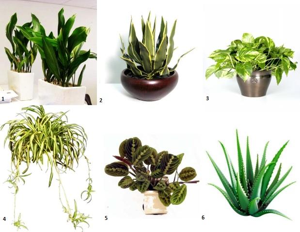 Pentru suflet 9 plante de apartament capabile sa curete aerul for Plante de interior