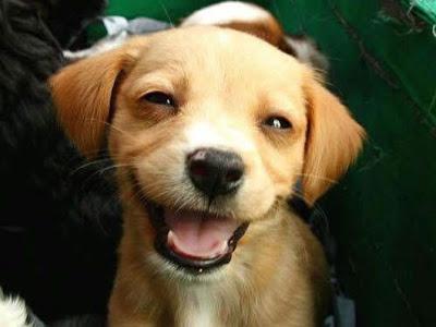 lindo+perro Imagenes chistosas de animales...
