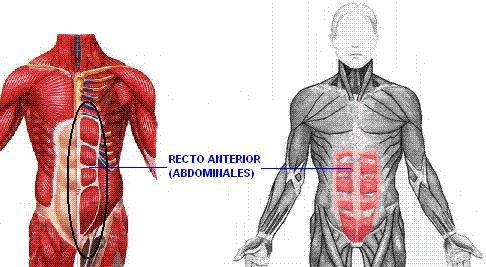 Fisioterapia y Salud: ABDOMINALES