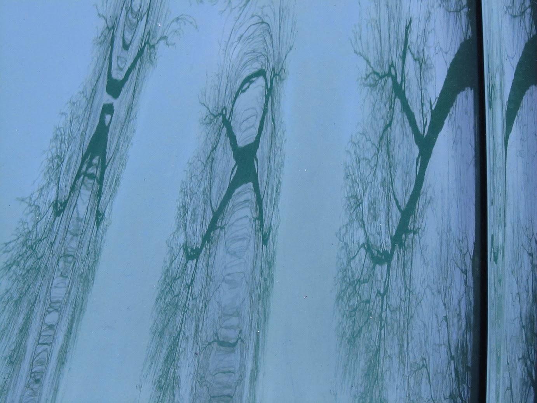 reflectie van tak in lichtblauwe auto