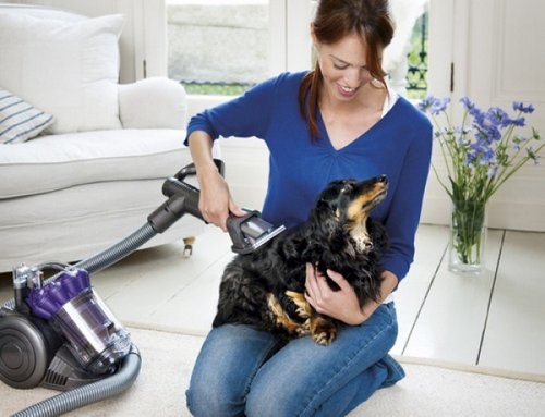 How To Clean Up After Pets Properly Gsr Cleaning