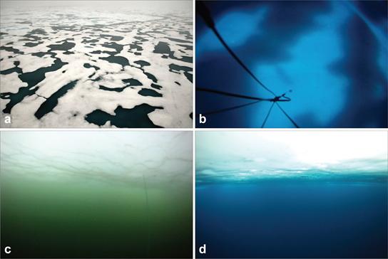 abondance présence de phytoplanction dans la zone arctique