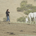 Courageous Photographers Chronicle How Wild Horses Live In Effort To Save Them