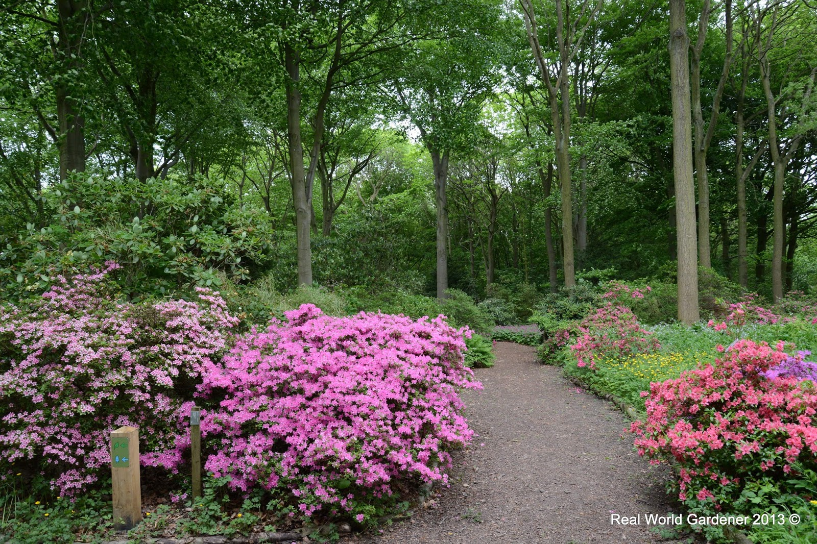 Real world gardener taming trees and shrubs in design elements for Garden design podcast