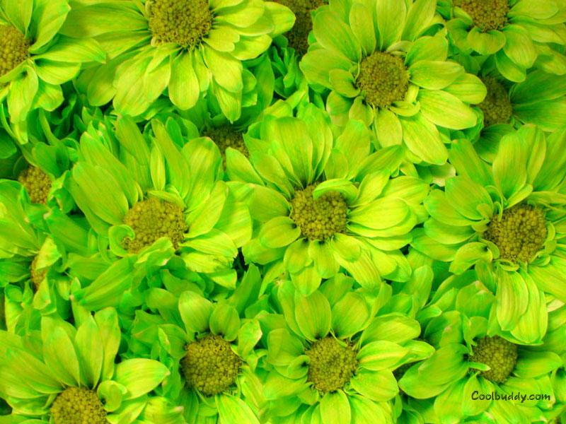 green flowers wallpaper 1 - photo #11
