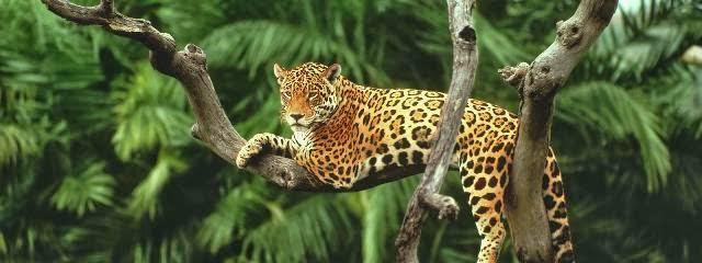 Berikut adalah Potret beberapa hewan paling langka dan dilindungi di