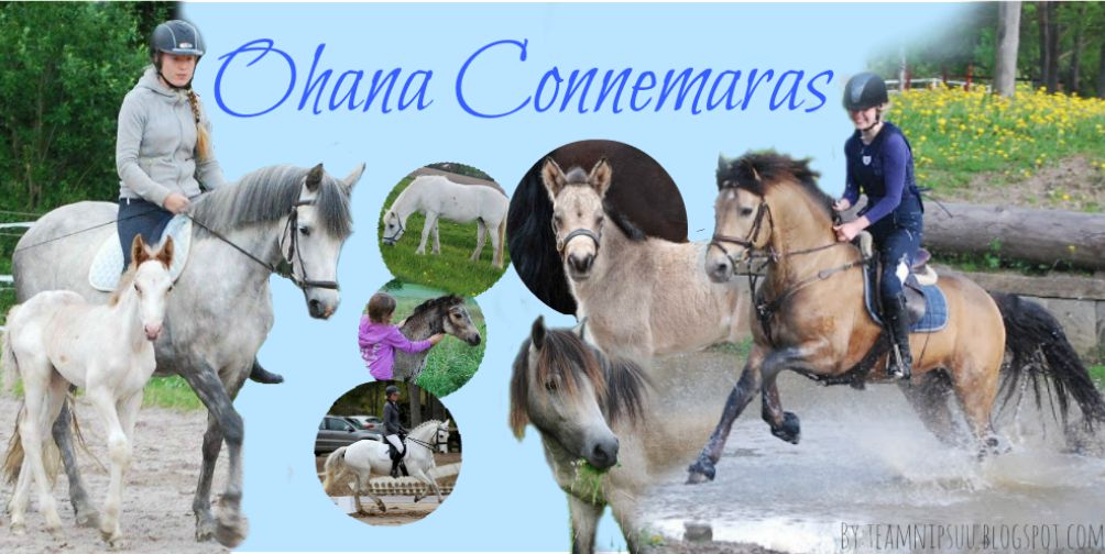 OhanaConnemaras