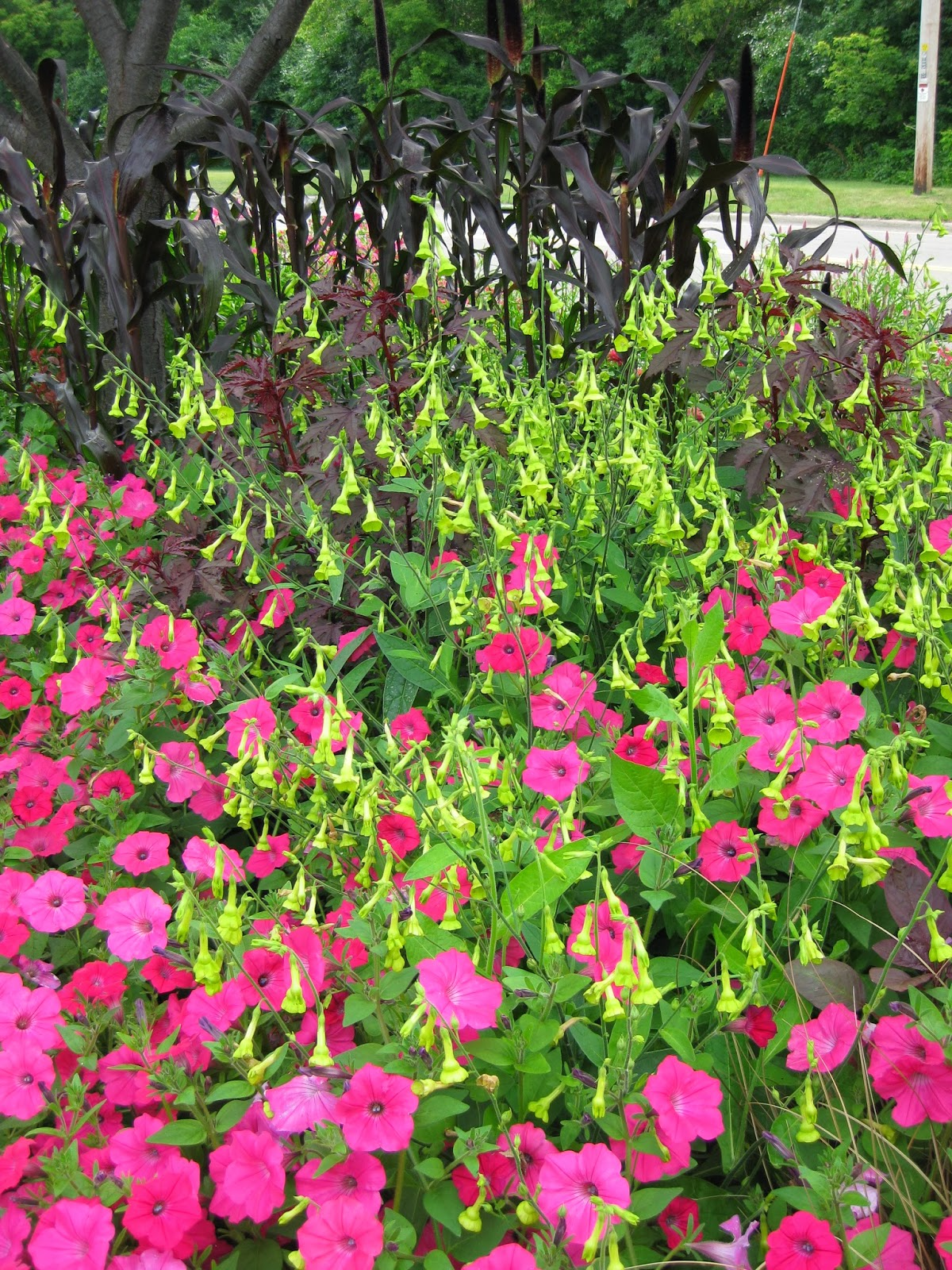 Rotary botanical gardens hort blog consider a seasonal - What is lime used for in gardening ...