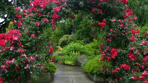 Mirando al mundo con sentimientos hermosos jardines for Jardines bonitos