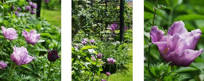 Min have i maj