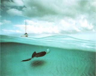 Скат и корабль. Гранд-Кайман, Западная Индия