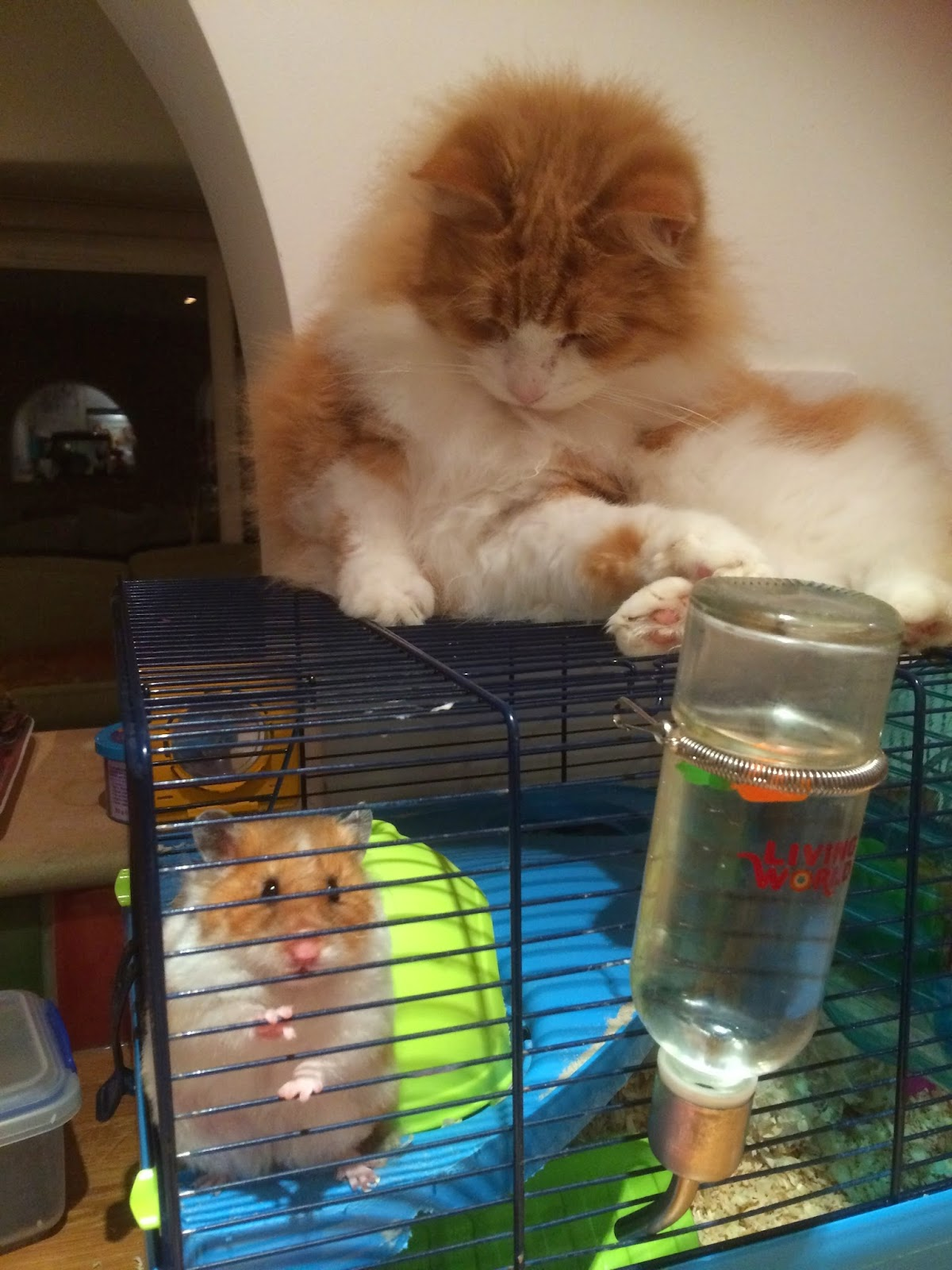 cat and hamster