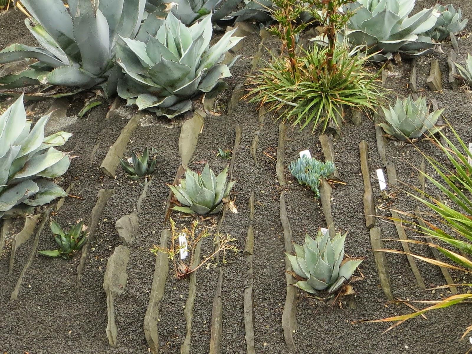 Garden Blogger\'s Fling, Portland: Kuzma Garden