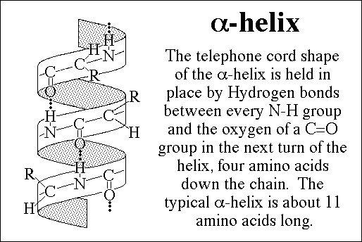 knowledge class  large organic molecules