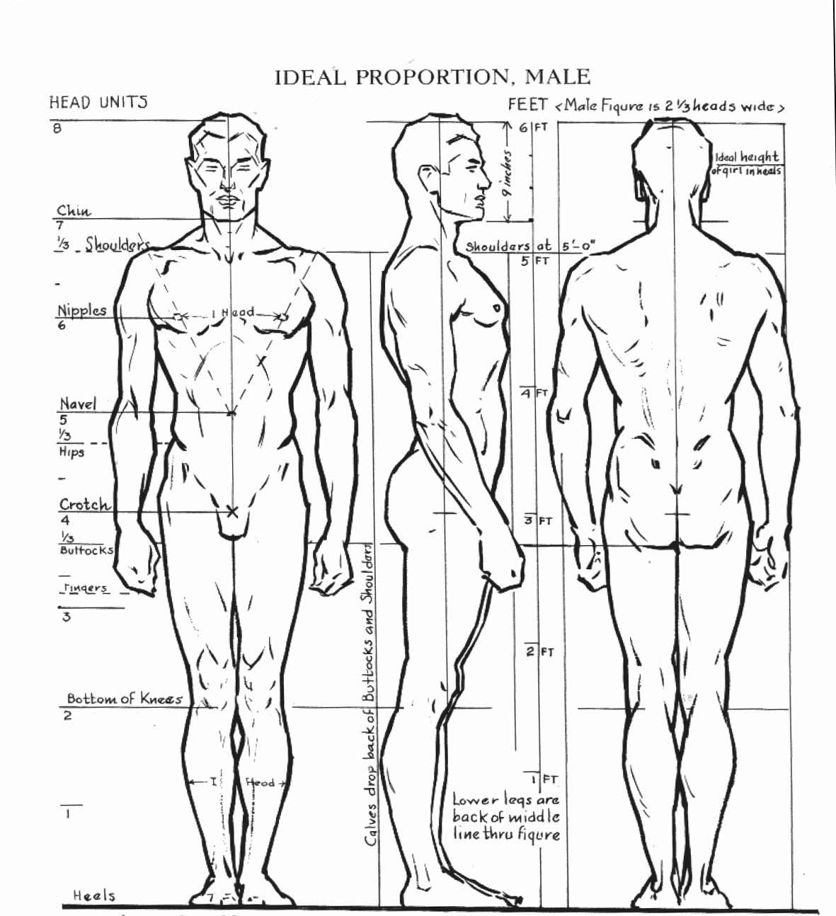Уроки анатомии собственного тела в hd 1 фотография
