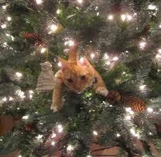 Cat stuck in Christmas Tree.