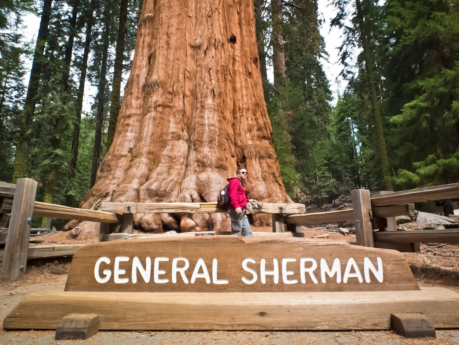 General Sherman is the Tallest Tree on Planet HD Pictures