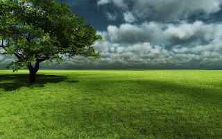 Beautiful Grassland