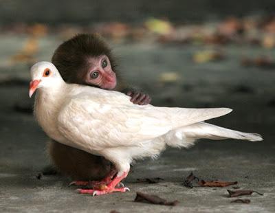 Foto Hewan - Hewan Penuh Cinta