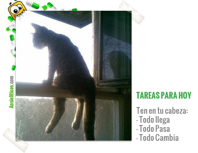 Imagen Bonita de Gato