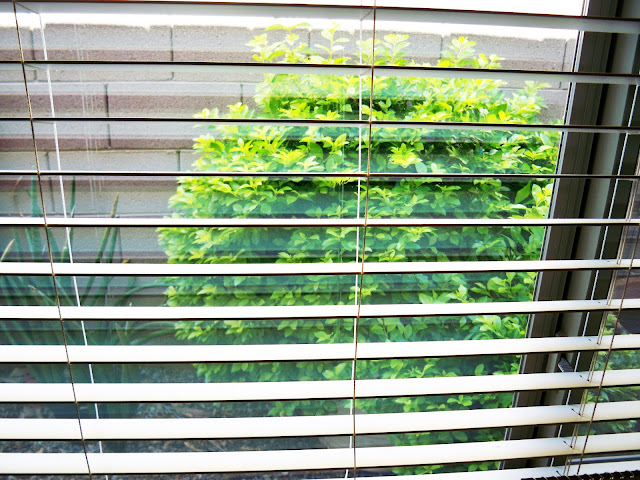 how to clean dusty window screens