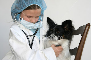 check up for dogs and cats at Bellambi vets