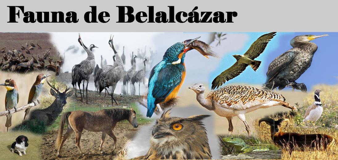 Fauna de Belalcazar