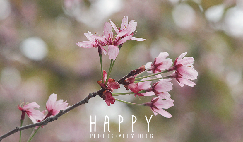 H A P P Y — Photography Blog