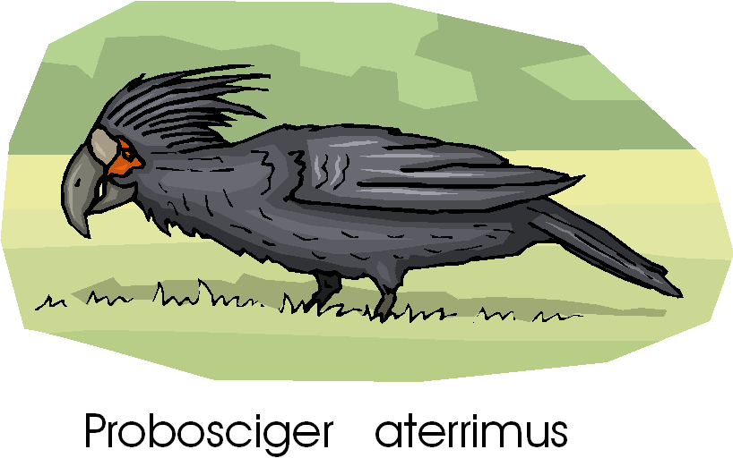 Palm Cockatoo Free Bird Clipart