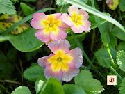 petites fleurs de printemps. Collier perles de tissus coton